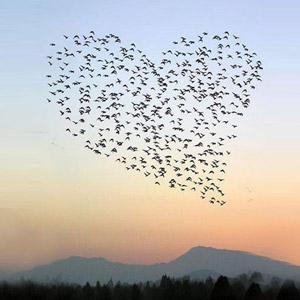 Você consegue ver amor em todos os lugares?