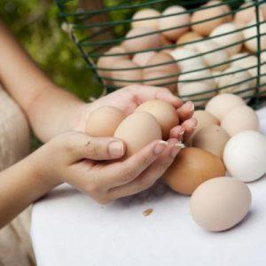 Onde colocar seus ovos?